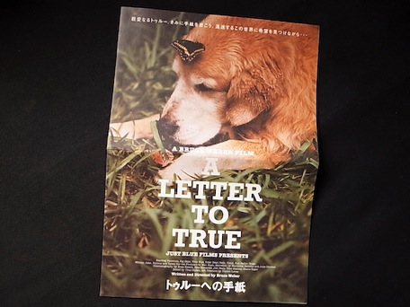 a_letter_to_true_movie-1.jpg