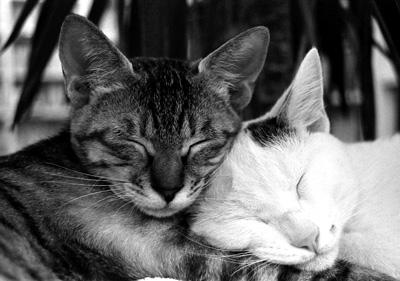 sleepcats